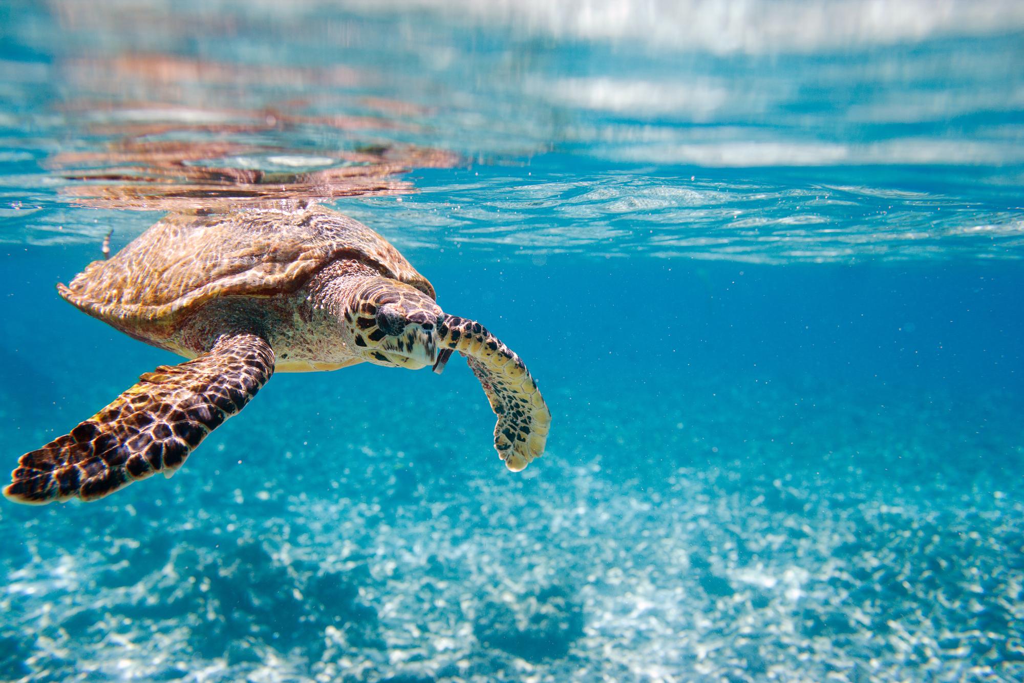 Dlaczego musisz zacząć troszczyć się o oceany?